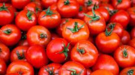 tomat heathlinecom