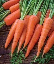 wortel burpeecom